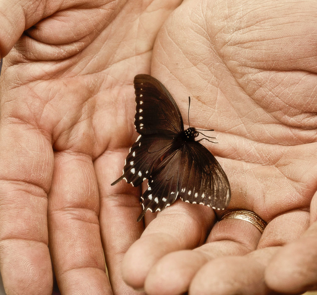 Uncategorized Butterfly Hand butterfly in hand grab shot 198 the digital story hand