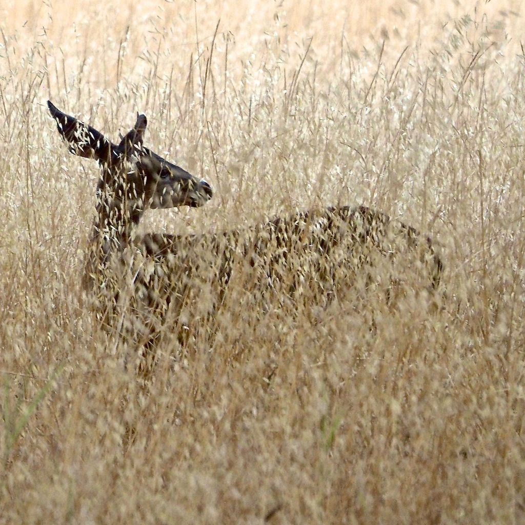 http://thedigitalstory.com/2014/08/15/doe-in-grass.jpg