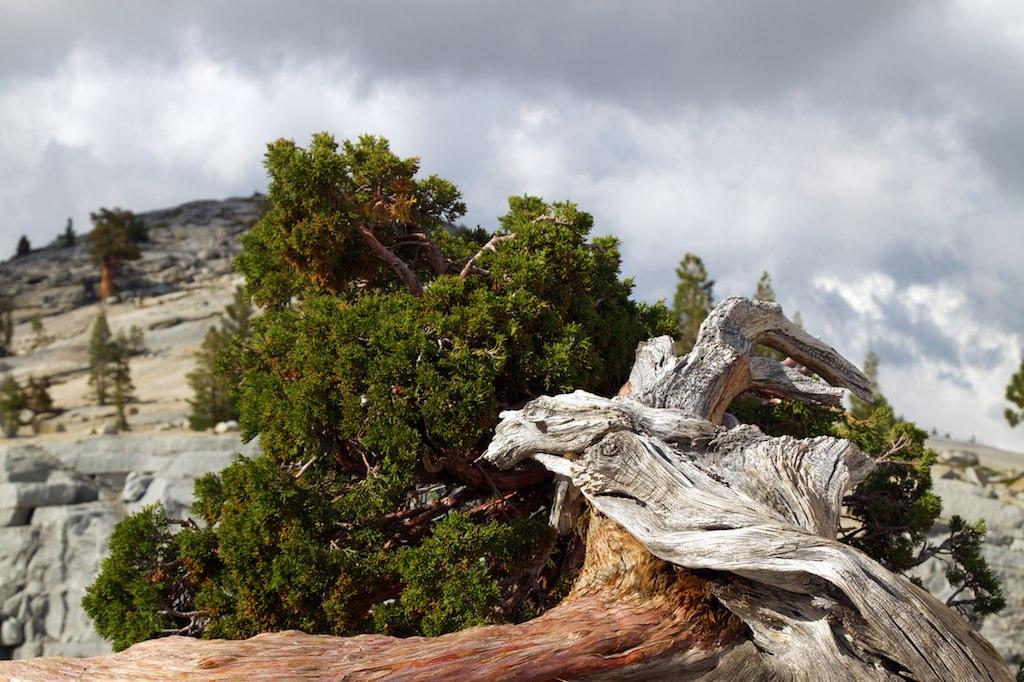 http://thedigitalstory.com/2014/09/10/wood-rock-sky.jpg