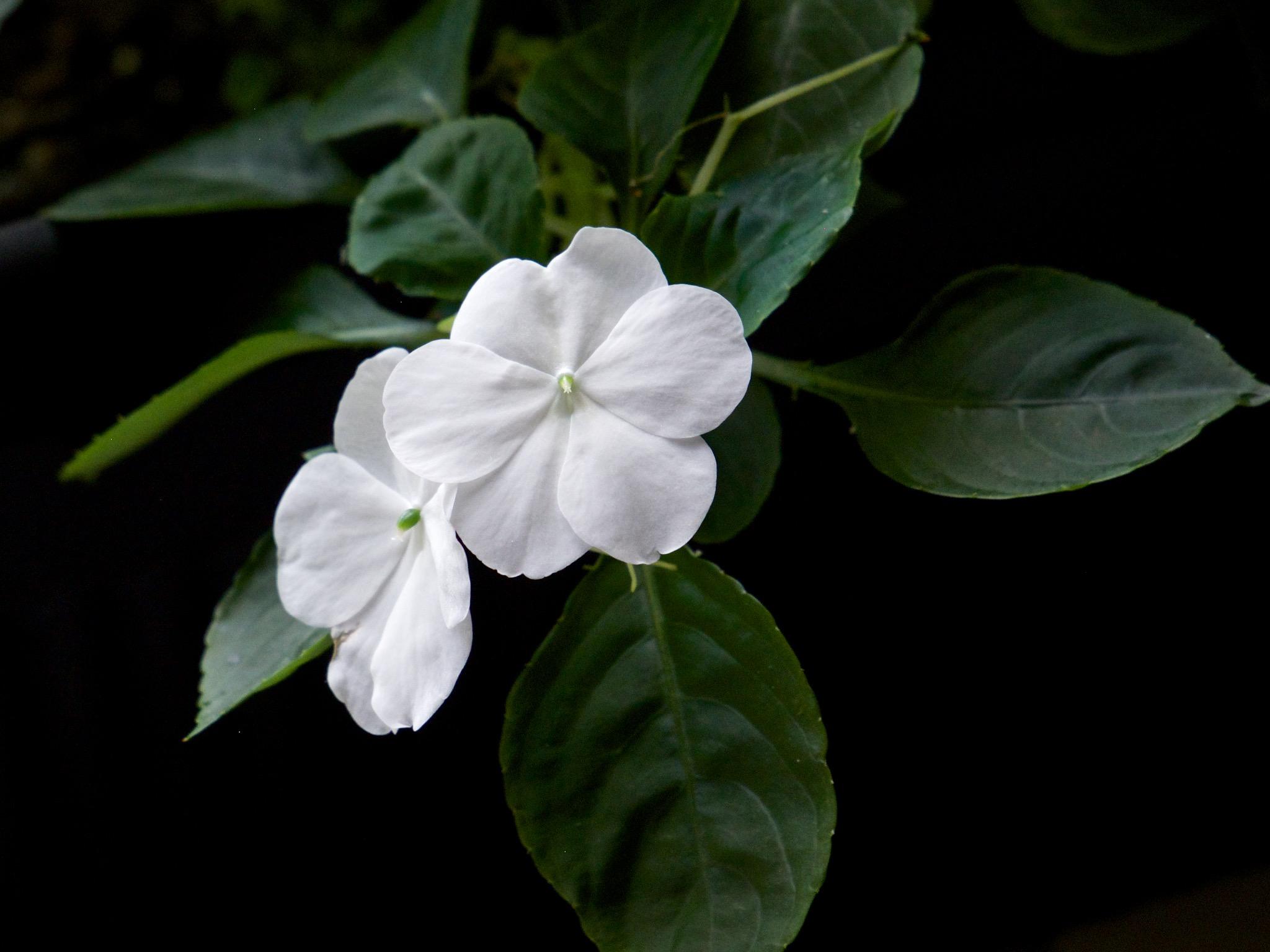 http://thedigitalstory.com/2014/12/05/panasonic-35-100mm-flower.jpg