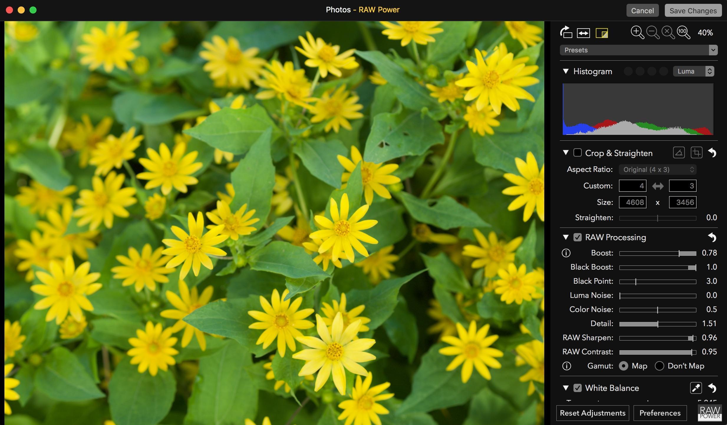 http://thedigitalstory.com/2018/06/06/original-flower-raw.jpg
