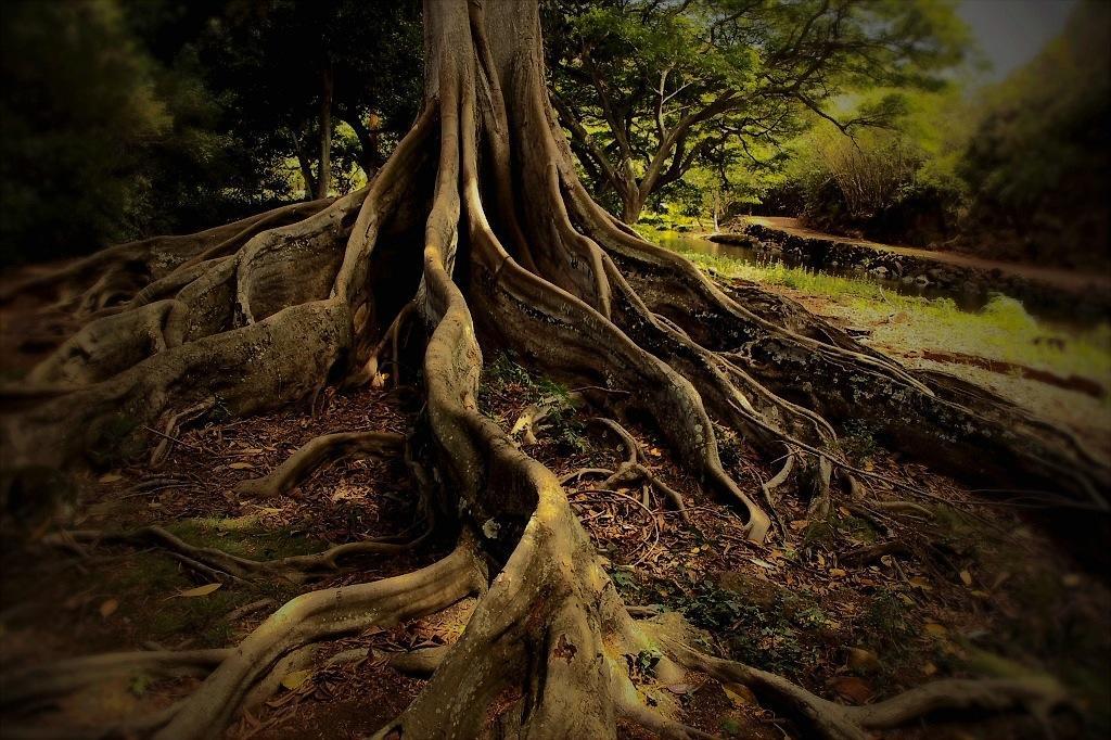 http://thedigitalstory.com/2018/09/25/jurassic-park-tree.jpg