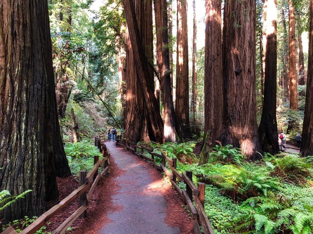 http://thedigitalstory.com/2019/05/10/redwoods-tds-2.jpg