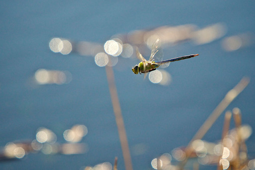 Dragonfly During TDS Workshop