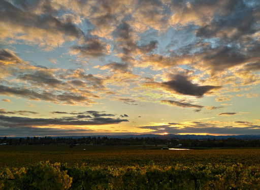 Vineyard Sunset HDR with iPhone 4S