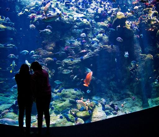 aquarium_silhouette.jpg