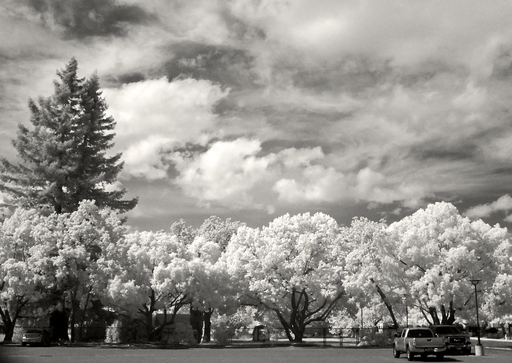 Line of Trees Infrared Fujifilm X20