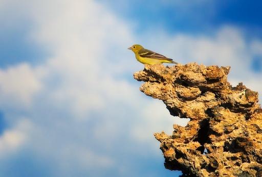 mono-lake-bird.jpg