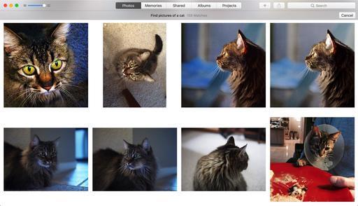 cat-pictures.jpg