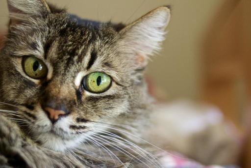 dibs-the-cat.jpg