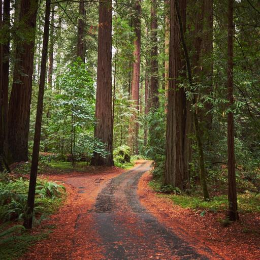 Road-through-the-forest.jpg