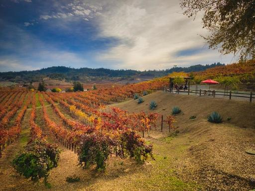 finished-vineyard.jpeg