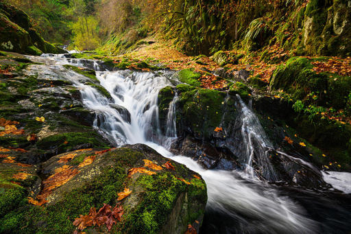 Scott-Davenport-US-Oregon-2018-11-09-0022-Along+Sweet+Creek+In+Oregon.jpg