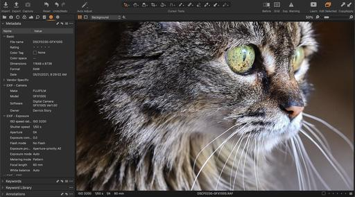 cat-portrait-GFX100S-1600.jpg
