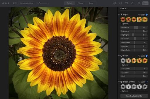Sunflower-edit-1024.jpg